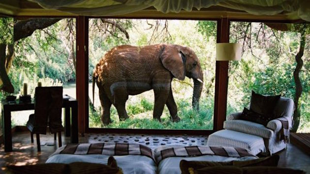 2 South-African-Safari-Bridal-Musings-Wedding-Blog--630x354